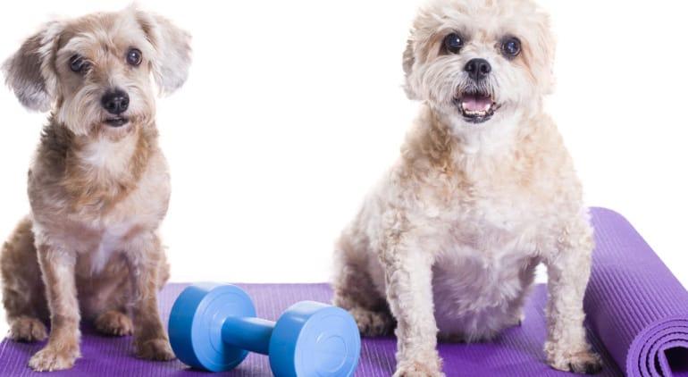 Doga ¡Practica Yoga junto a tu perro!