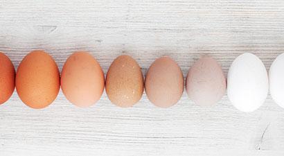 ¿Es mejor un huevo blanco o un huevo moreno?